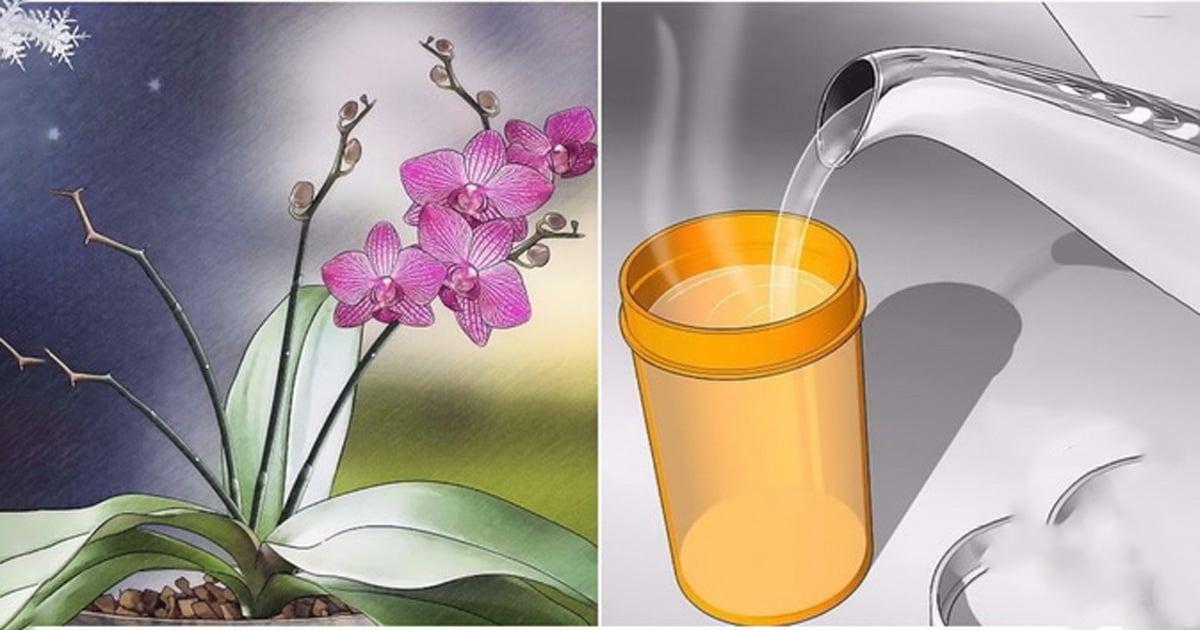 2-3 Kaşık Koyun Orkideniz Eskisinden Daha Canlı Olacak
