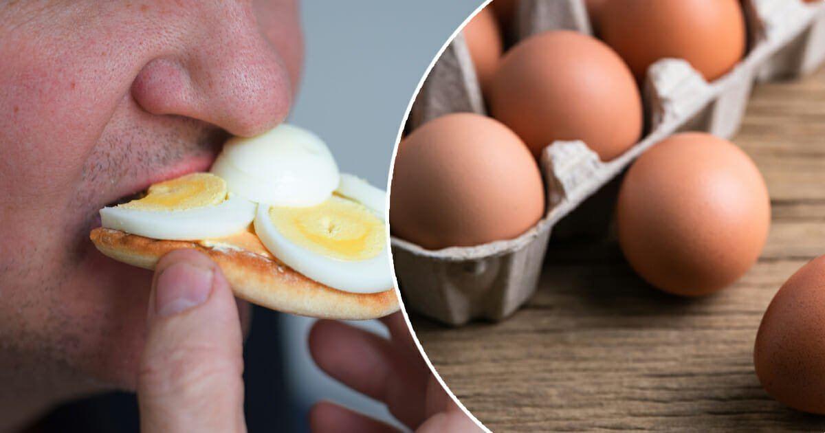 Zeki Olmanızın Sebebi Yumurtaya Bağlıymış