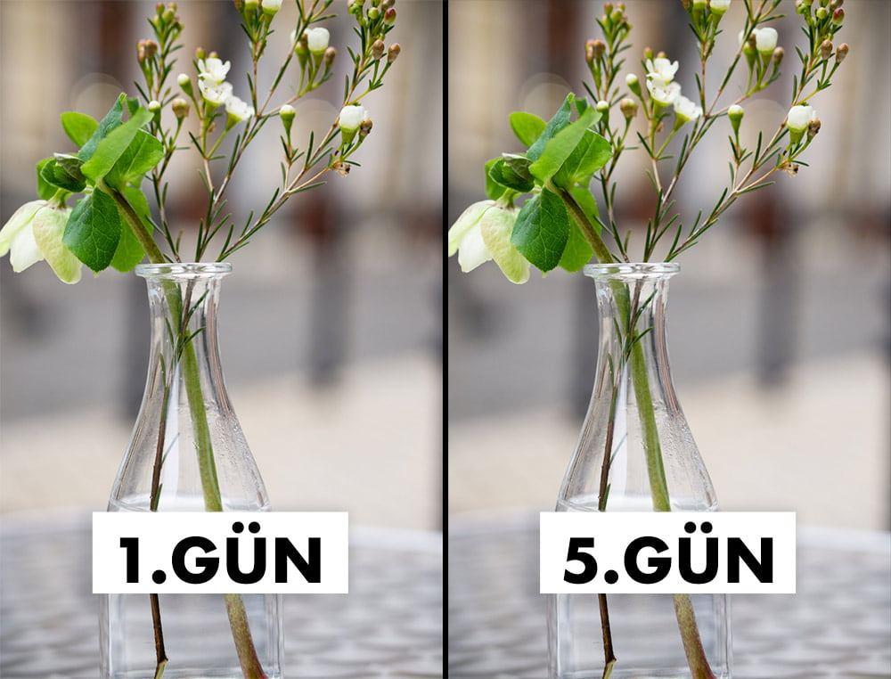 çiçeklerin ömrünü uzatır