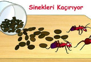 Kahvenin İçmek Dışındaki 8 Harika Kullanım Alanı