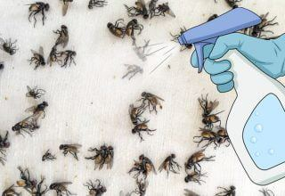 Sinek, Sivrisinek ve Hamam Böceğinden 2 Dakikada Kurtaran Sprey